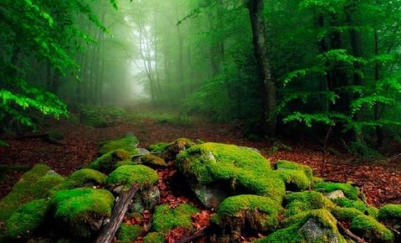 طبیعت زیبا و شگفت انگیز