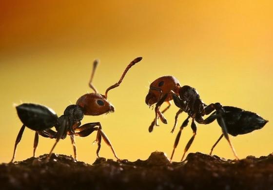 راه فراری دادن تمام مورچه ها از خانه