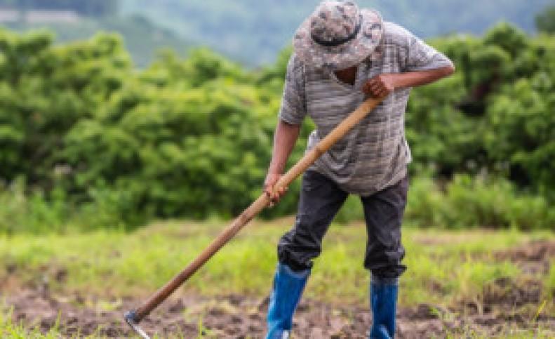 تاریخ و پیام تبریک روز جهانی کارگران مزرعه