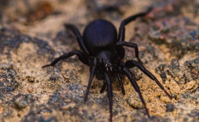 نجات از حمله قلبی با زهر کشنده یک عنکبوت!