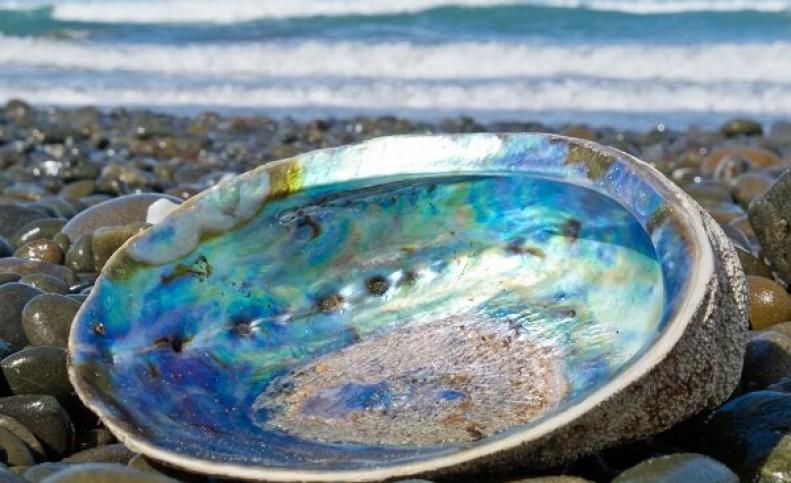 نمایشگر نشکن موبایل از جنس صدف دریایی تولید شد