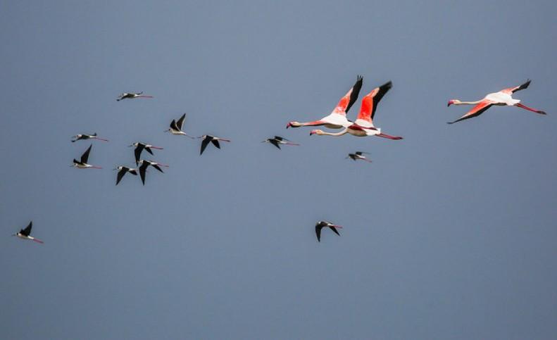 تالابهای کشور خط پایان پرندگان مهاجر؟